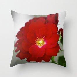 Open Red Shrub Roses Throw Pillow