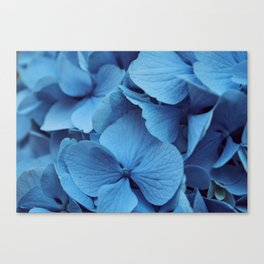 Sunny Day Blues Canvas Print