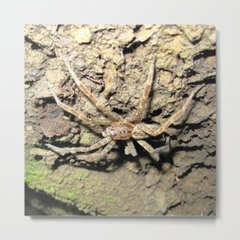 Watercolor Spider, Fishing Spider 07, Steinhatchee River, Florida Metal Print