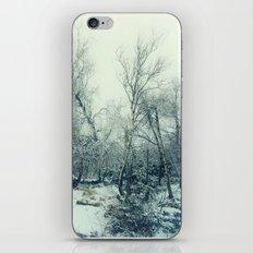 snow birch iPhone & iPod Skin