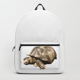 Sulcata Tortoise (grazing) Backpack