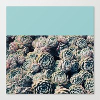 succulents Canvas Prints featuring Succulents by Leah Flores