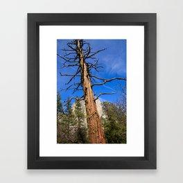 Yosemite Tree Framed Art Print