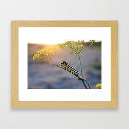 Caterpillar Sunset  Framed Art Print