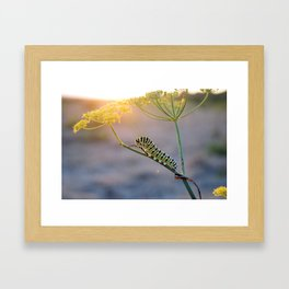 Caterpillar Sunset  Framed Art Print
