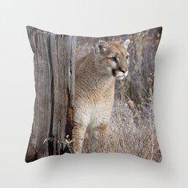 He is watching Throw Pillow