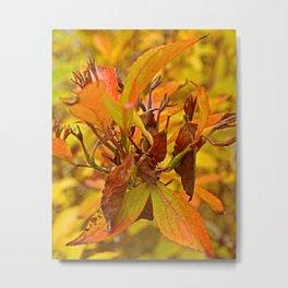 Autumn colour Metal Print