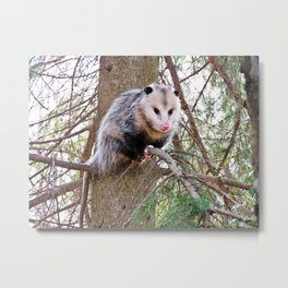 Possum on a Branch Metal Print