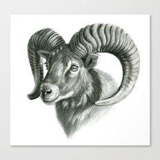 The mouflon G125 Canvas Print