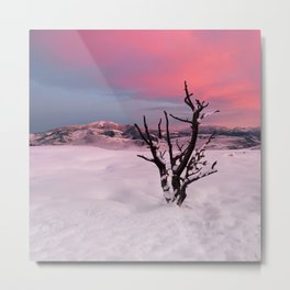 Sunrise in Yellowstone National Park Metal Print