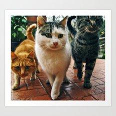 Cats series 02 Art Print