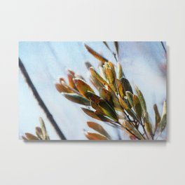 Bay Leaves with Frost Metal Print