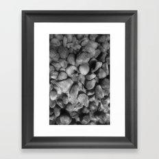 160819-8701 Framed Art Print