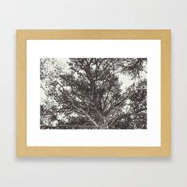 Growth | Estes Park, Colorado Framed Art Print