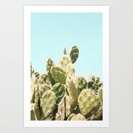 Cactus Summer Art Print