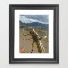 Gardner Grasshopper Framed Art Print