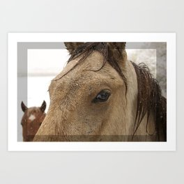 Eye of Buckskin Horse Art Print