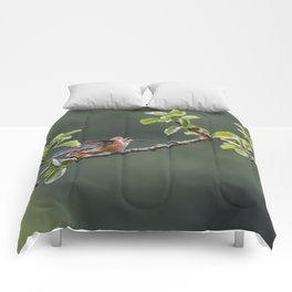 Rufous Hummingbird at Large, No. 2 Comforters