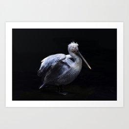 Mr. Pelican Art Print