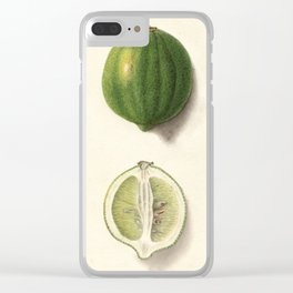 Vintage Illustration of a Lime Clear iPhone Case