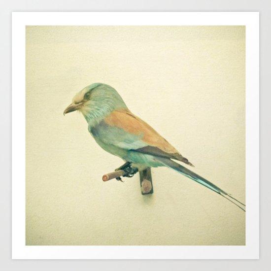 Bird Study #2 Art Print