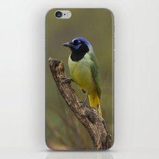 Green Jay iPhone & iPod Skin