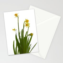 Narcissus flowers Stationery Cards