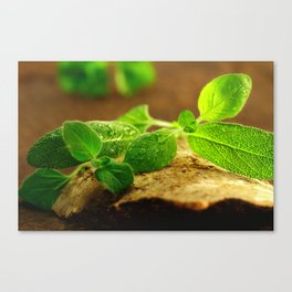 Sage leaves Natura Canvas Print
