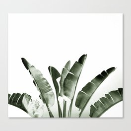 Traveler palm Canvas Print