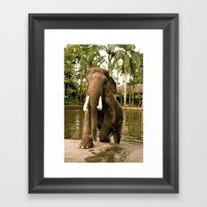 Magnificent Beast Framed Art Print