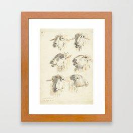 Vintage Sheep Illustration, 1800 Framed Art Print