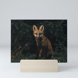 Fox Canada Mini Art Print