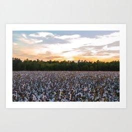 Cotton Field 11 Art Print