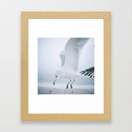 Seagull {One}  Framed Art Print