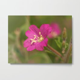 Great Willowherb Metal Print