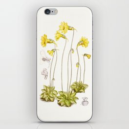Pinguicula lutea botanical illustration iPhone Skin