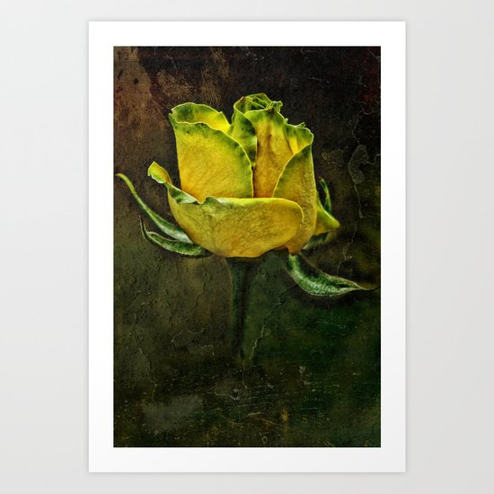 Rose Of Yellow Art Print