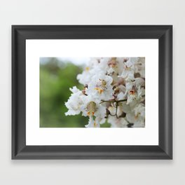Catalpa Blossoms Framed Art Print