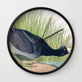 American Coot Vintage Bird Illustration Wall Clock
