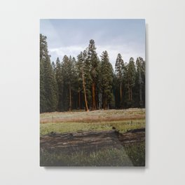 Giant Forest Love Metal Print