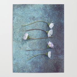 Daisies in a row Poster