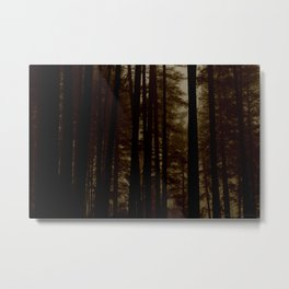 Into the dark forest... Metal Print