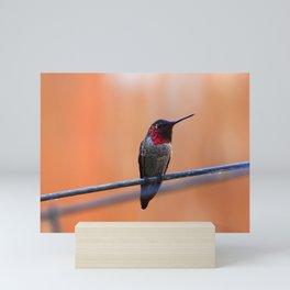 Annas Hummingbird Mini Art Print