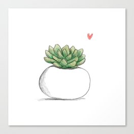 Succulent in Plump White Planter Canvas Print
