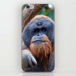 OrangUtan_20181001_by_JAMFoto iPhone Skin