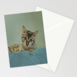 Cute Things Come in Kitty Packages Stationery Cards