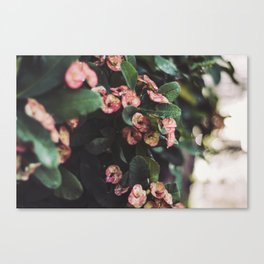 Hanging Flowers, Bali Canvas Print