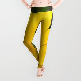 Bright Yellow Gazania Flower Leggings