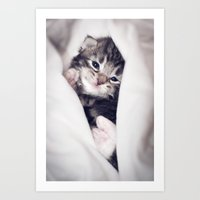 blankets Art Prints featuring Baby kitten in blankets by JosignArt