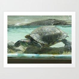 Aquatic life in Colorado Art Print